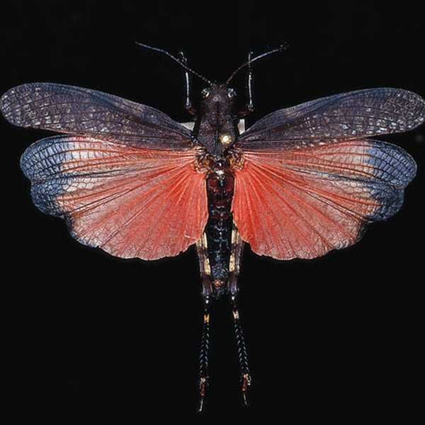 über 1.100 Schmetterlingsarten