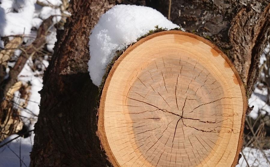 Wertvoller Rohstoff Holz