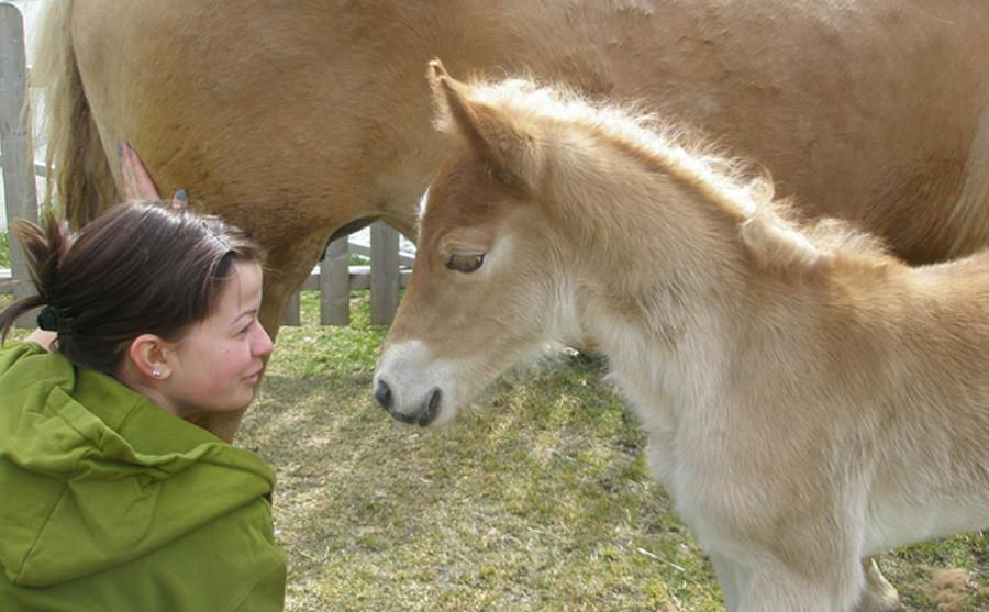 Pferde und Pony