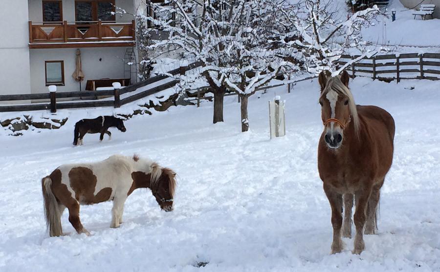 Albeinelerhof Winter