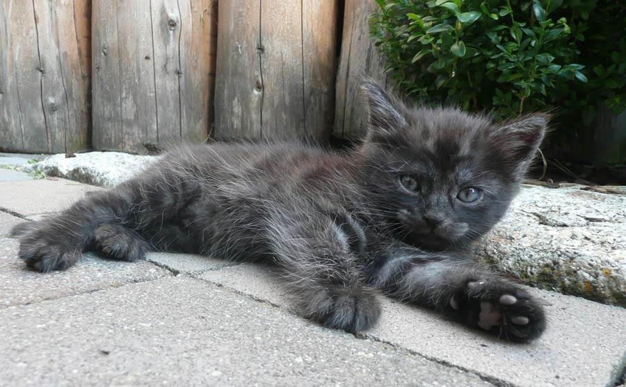 Schmuse-Kätzchen