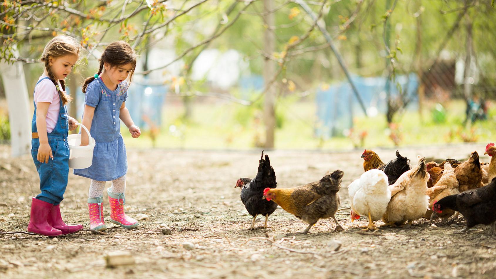 Familienurlaub am Bauernhof Das intensive Naturerlebnis