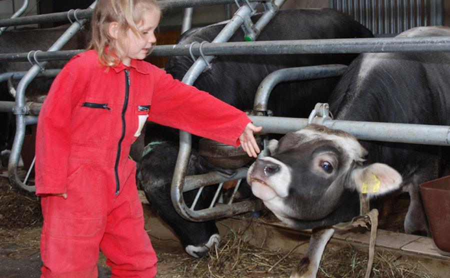 Mädchen bei den Kühen