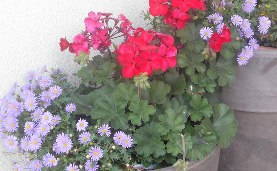 Blumen am Tobadillerhof